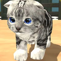 Play Cat Simulator